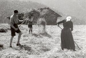 Zur Heuzeit bei Mittenwald, 1936